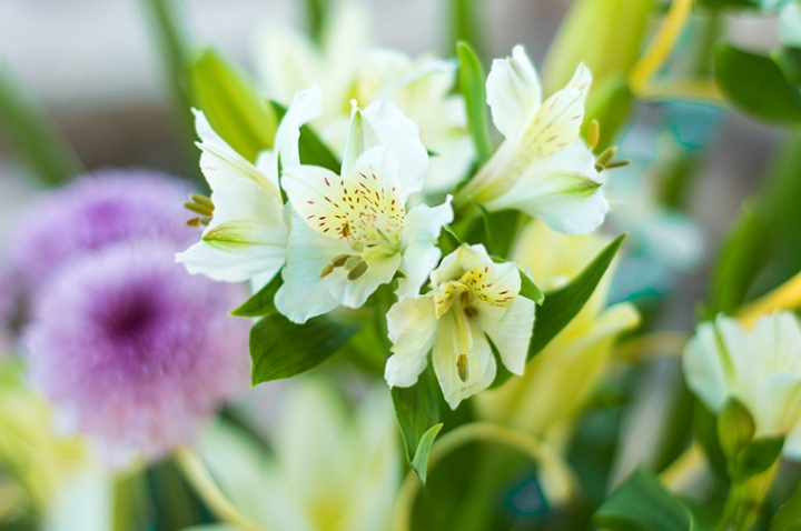 flor-blanca-y-amarilla-mini